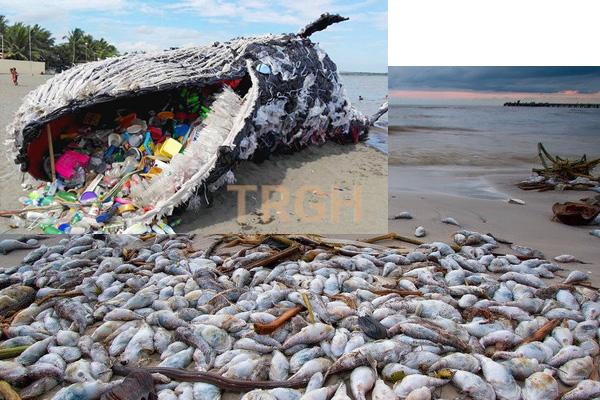 Biển bị nhiễm bẩn gây ảnh hưởng nghiêm trọng đến các sinh vật biển