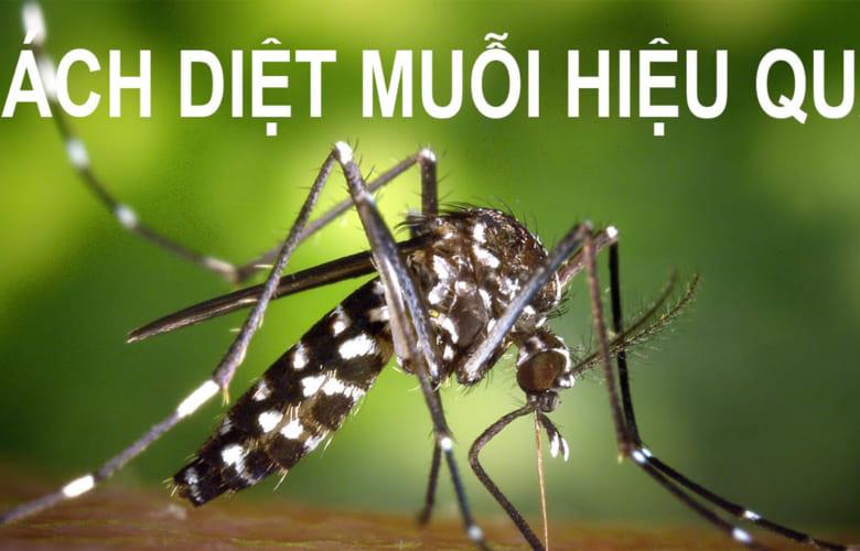 Cách đuổi muỗi hiệu quả vừa an toàn mà bảo vệ sức khỏe